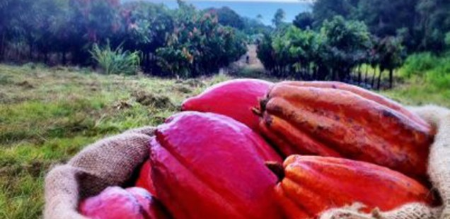 Hawai'i… Traveling from Bean-to-Bar in the land of Pele