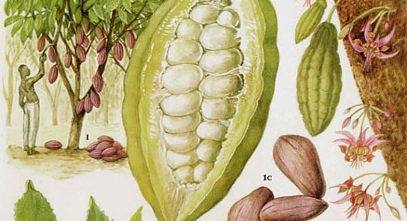 Cacao Beans & Pods